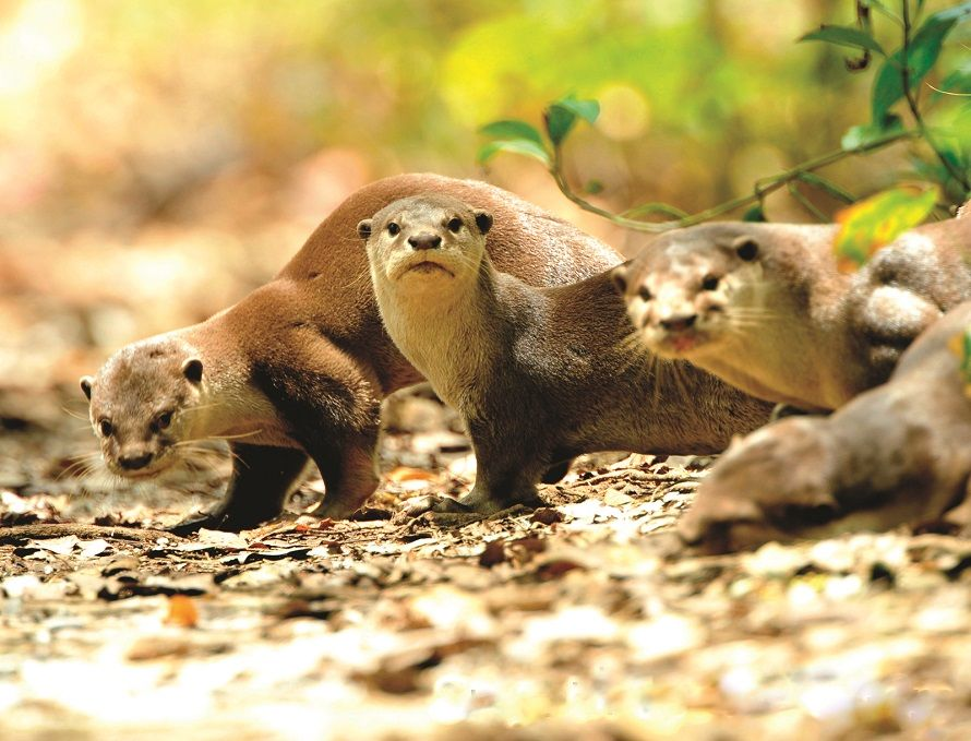 Otter Working Group